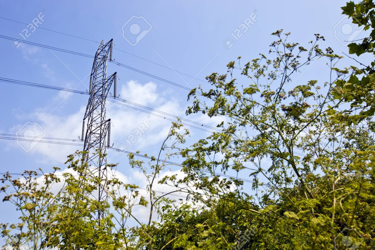 Electricity Pylon above trees Stock Photo - 23233732