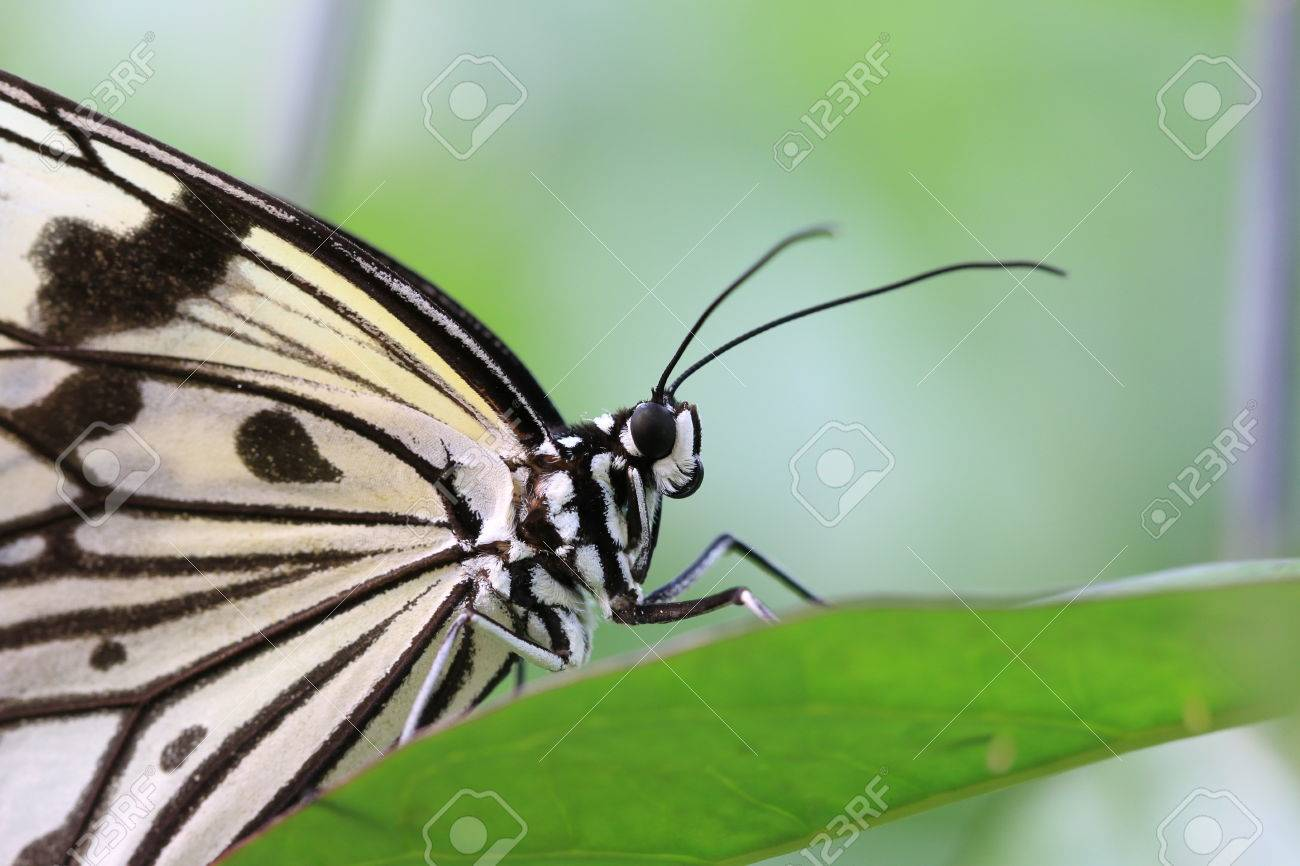 Excepcional Hojas De Trabajo De Mariposa Bandera - hoja de cálculo ...