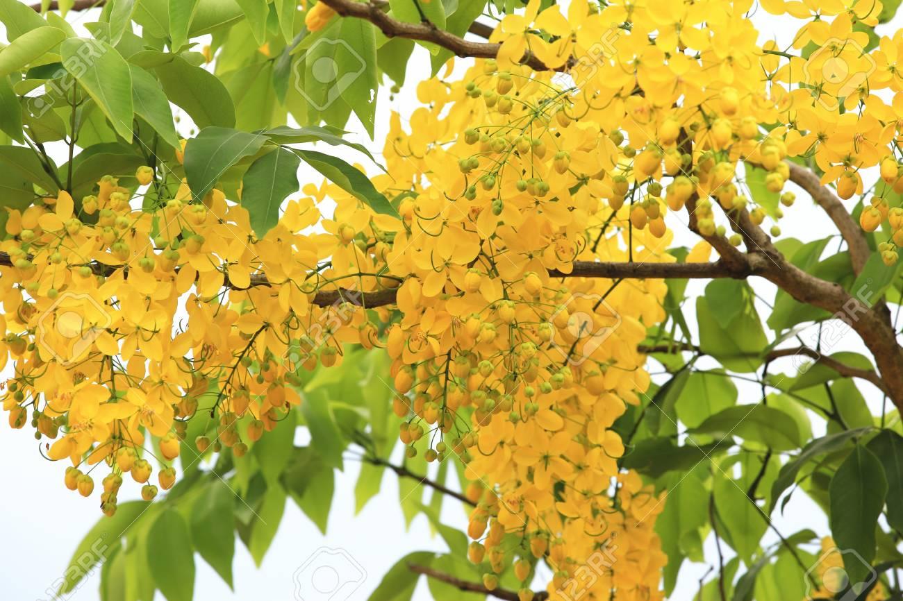 の 庭 黄金