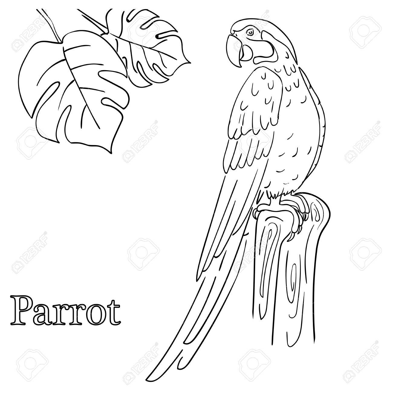 Papagei Malvorlagen Für Kinder Lizenzfrei Nutzbare Vektorgrafiken ...