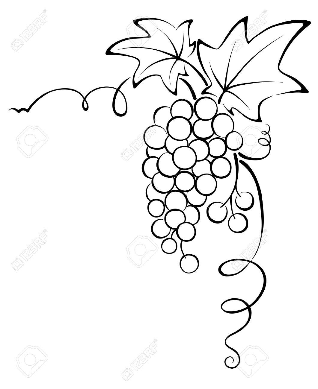 Graphic design - Grapevine Stock Vector - 13160550