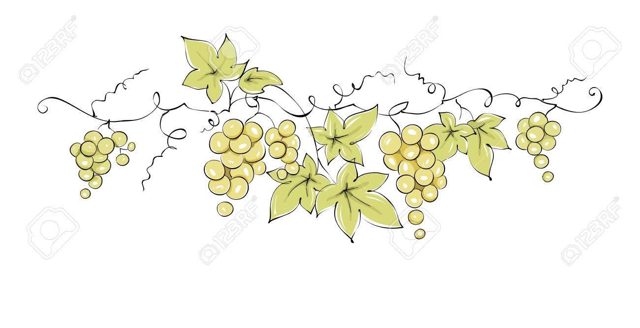 Léments De Design Vigne Illustration Vectorielle De Couleur Raisins Verts Dessin Croquis