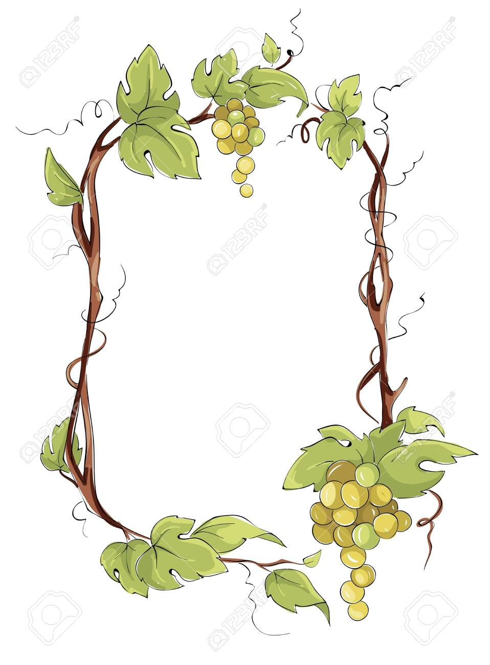 Frame from white grapes. Green grape vine, Vector illustration in watercolor style. - 144621386