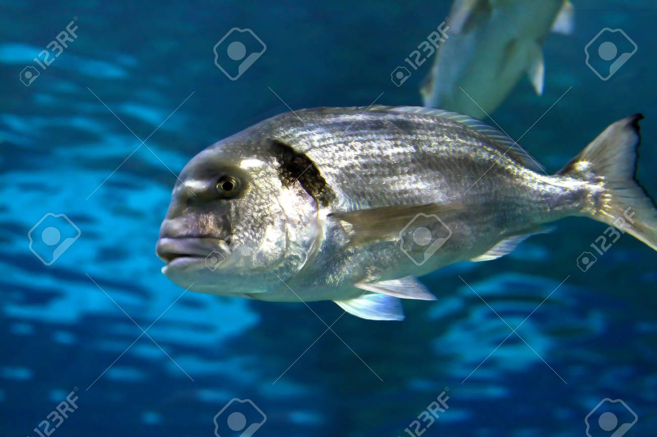 tropical marine fish swimming around in coral reef Stock Photo - 1641088