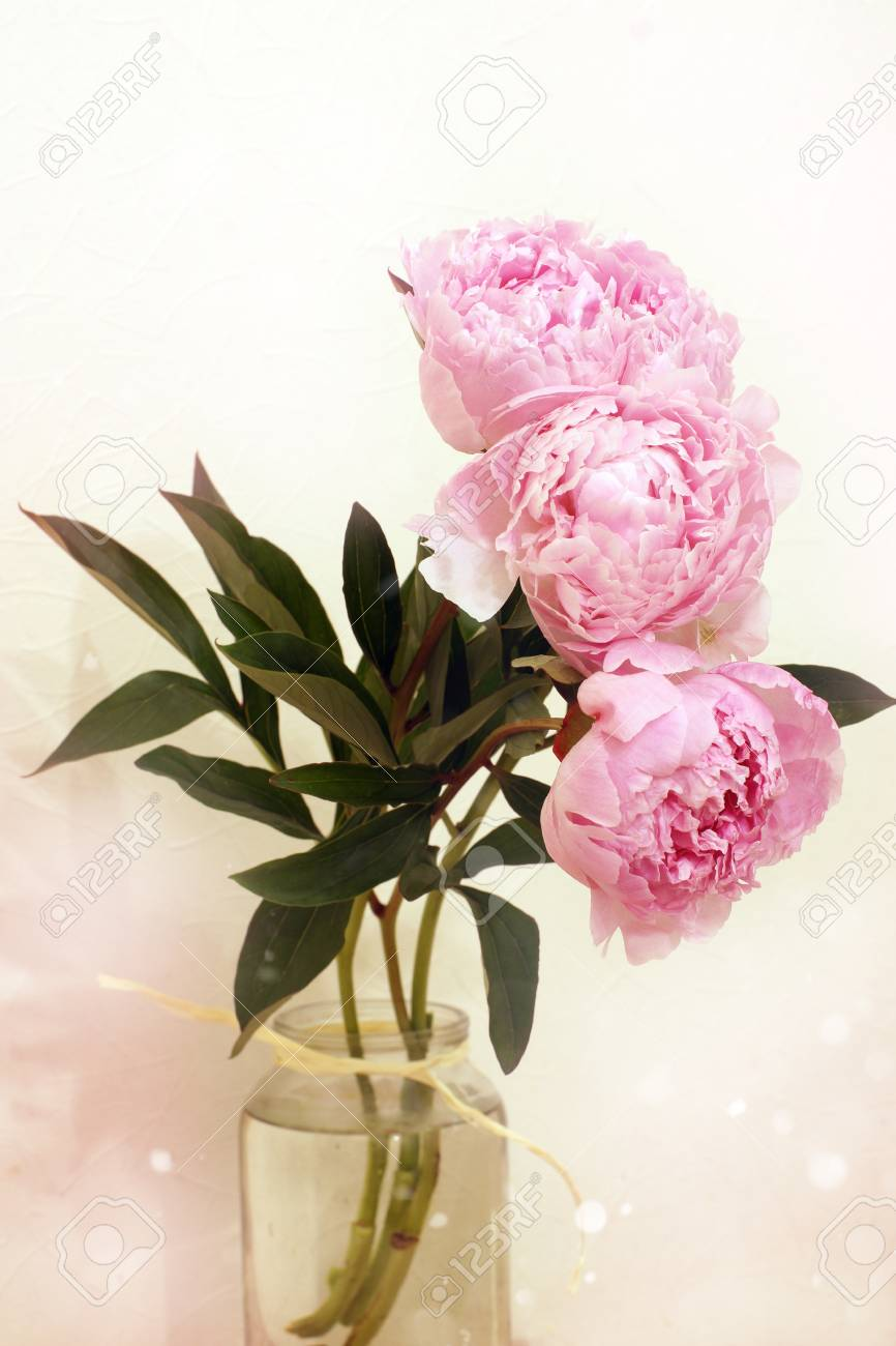 Blossoming Flowers Of Peony Bouquet Of Tender Pink Color Are Stock