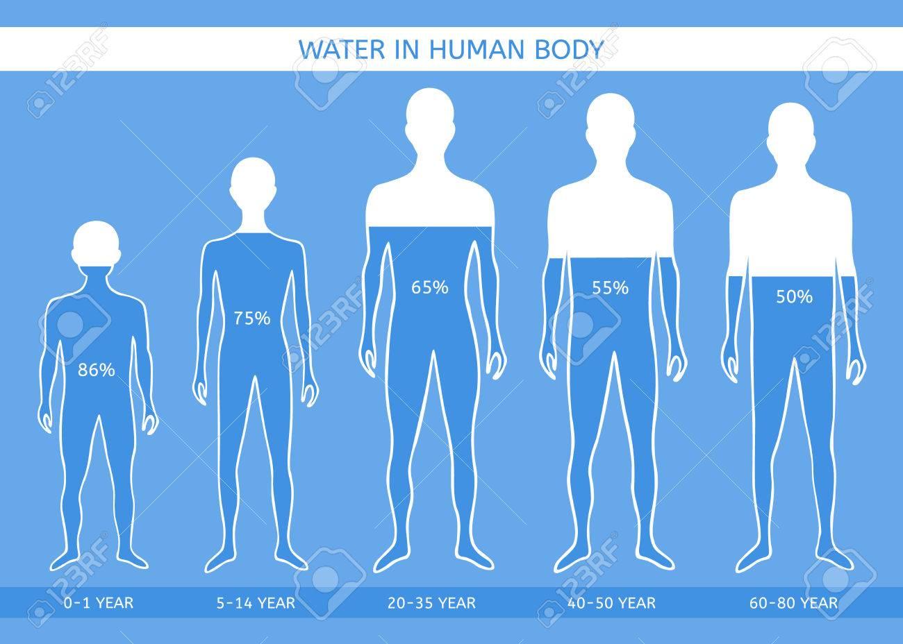 eau dans le corps