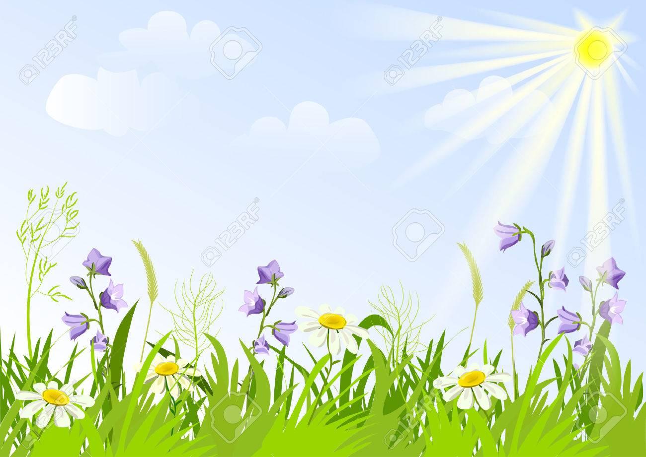 meadow with wildflowers. vector illustration Standard-Bild - 26233849