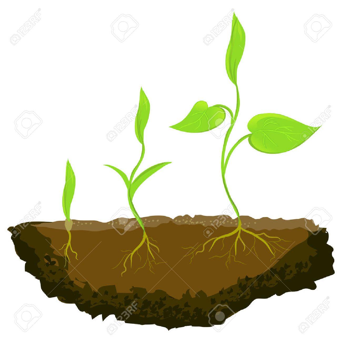 three plants growing in the ground. vector illustration Standard-Bild - 37263985