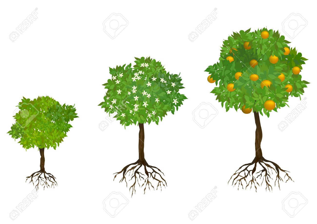 growing trees with roots. vector illustration Standard-Bild - 44641697