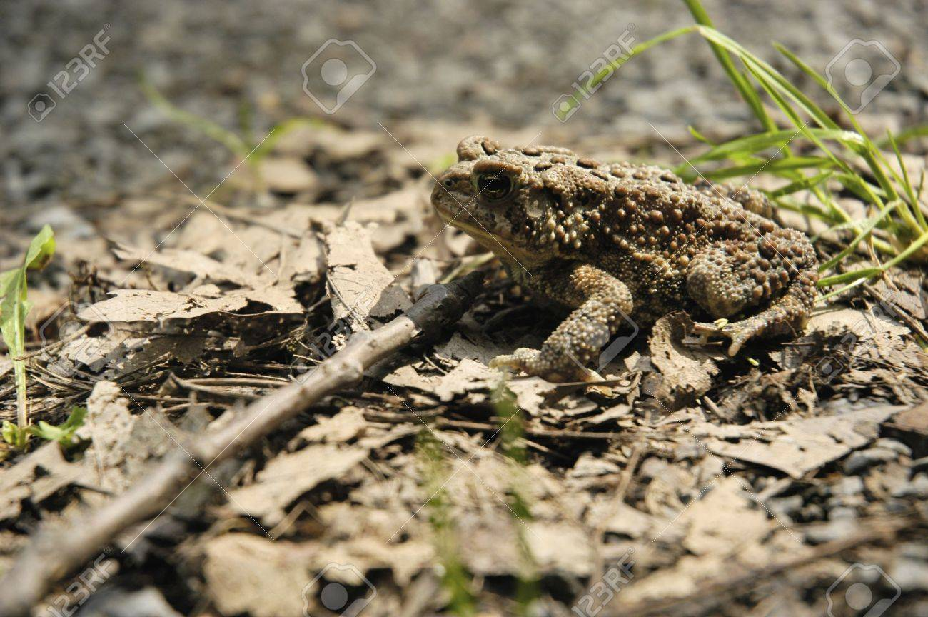 Toad-aly Toad Stock Photo - 7896298