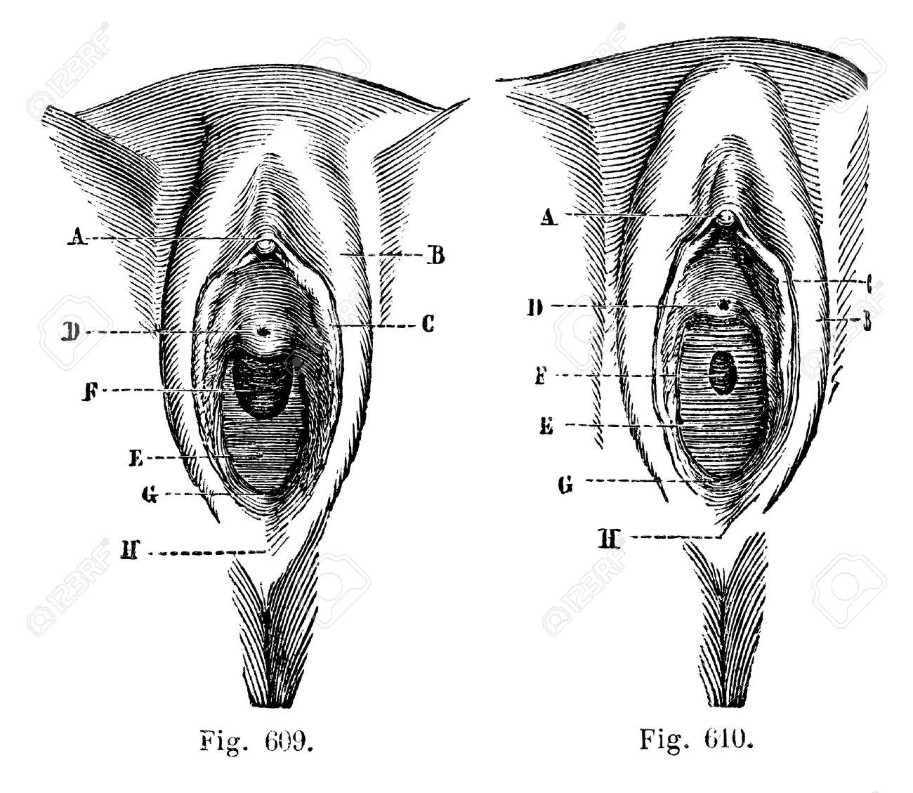 Abb.. 609. Vulva In Dem Kleinen Mädchen. Abb.. 610. Vulva In Dem ...