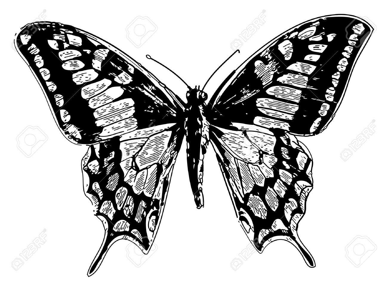 Old engraved illustration of a old world swallowtail or papilio machaon, isolated on white. Live traced. From the Trousset encyclopedia, Paris 1886 - 1891. - 13766911