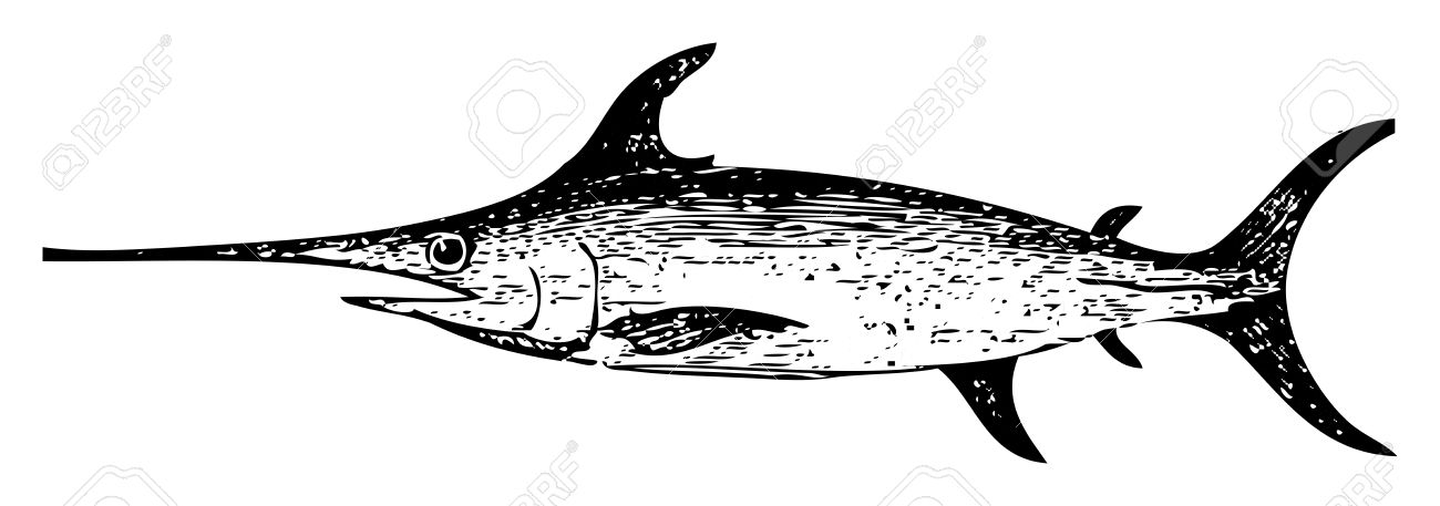 Old engraved illustration of a swordfish, isolated on white. Live traced. From the Trousset encyclopedia, Paris 1886 - 1891. Stock Vector - 13766532