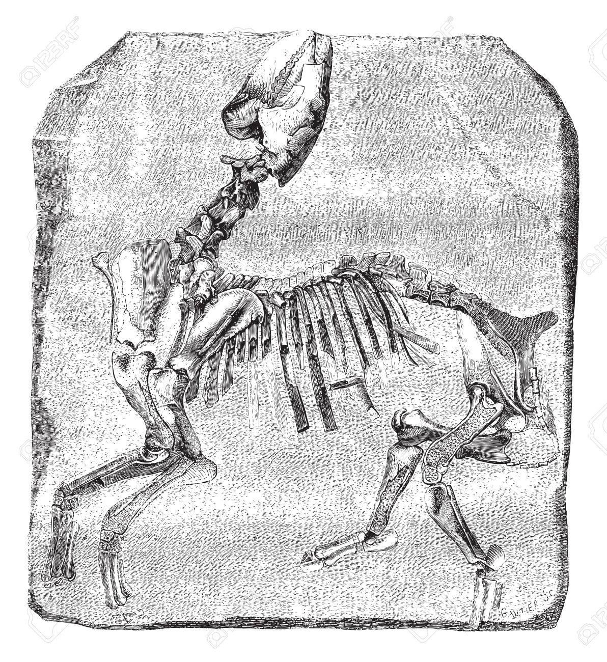 Beste Vergleichende Anatomie Beispiele Galerie - Anatomie Ideen ...