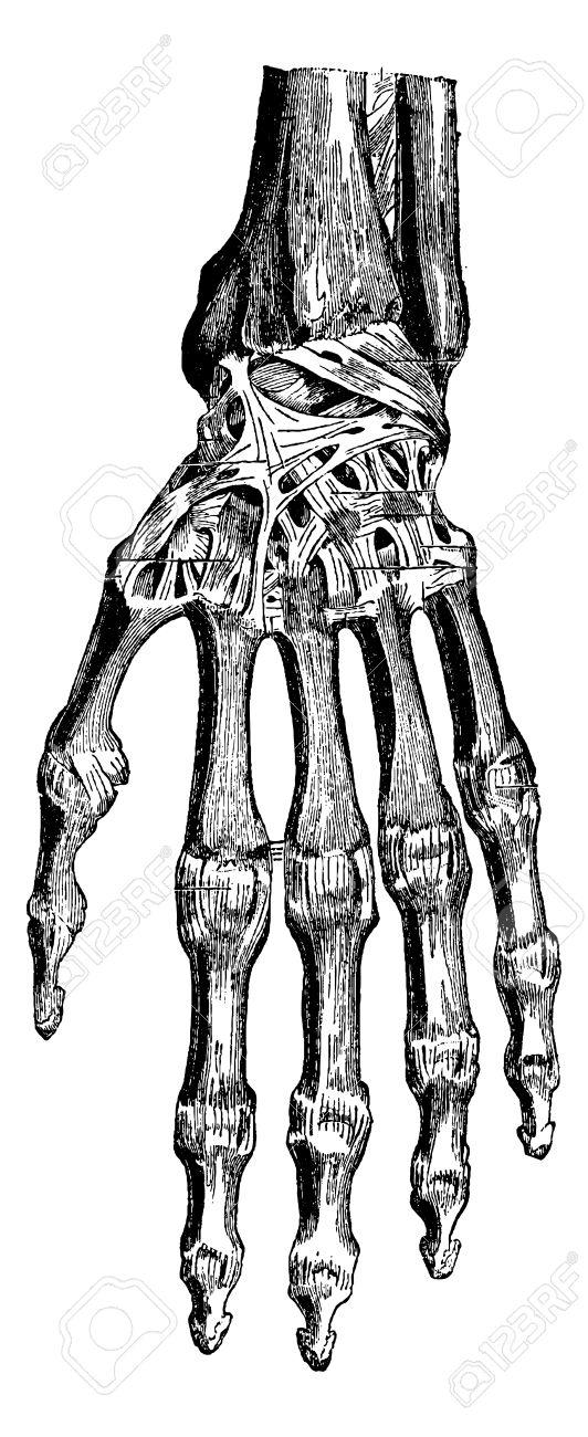 手 関節 橈骨 根
