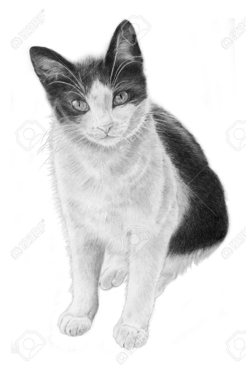 黒と白の猫手スケッチされていますリアルなイラスト ロイヤリティー