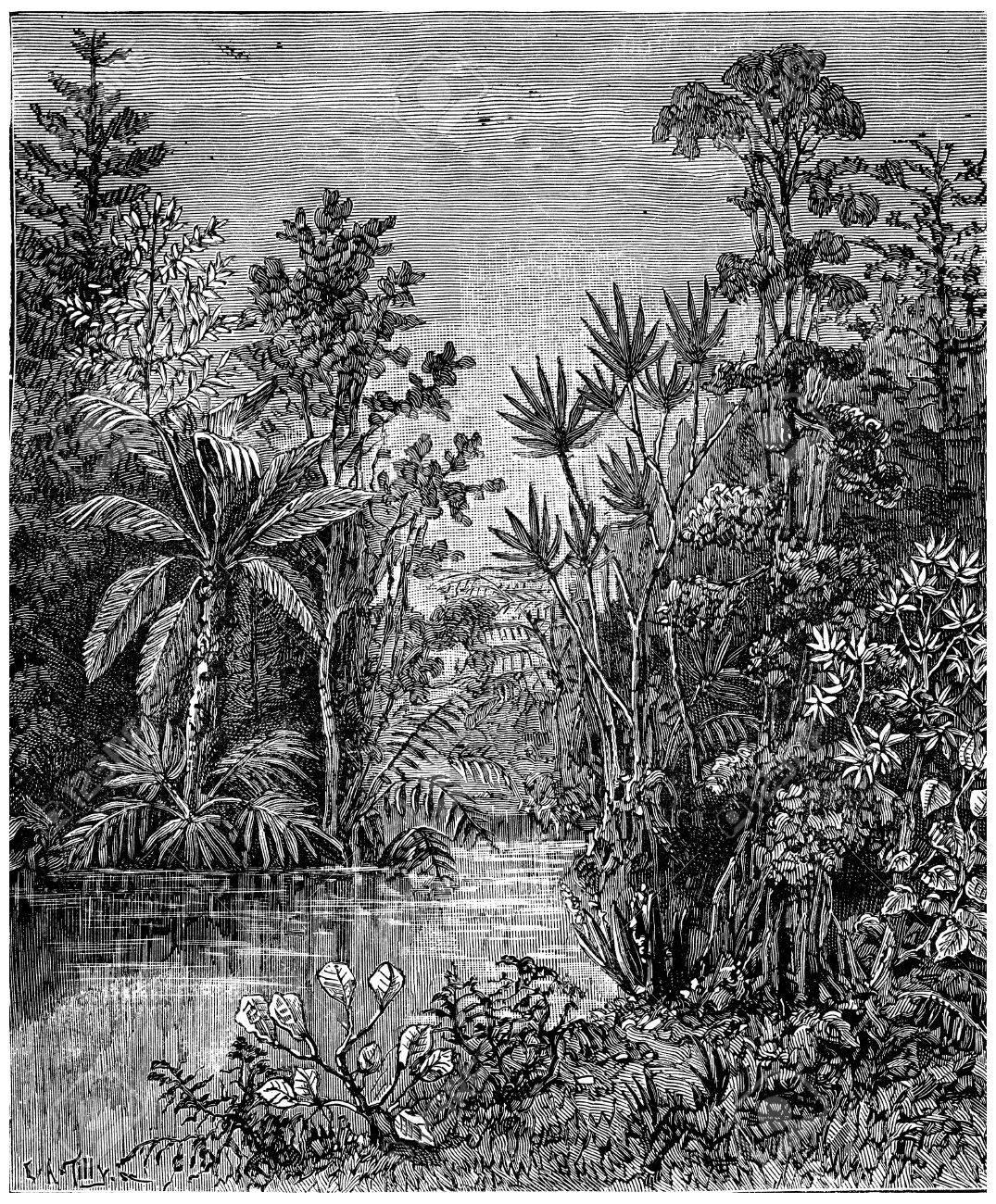 Plant landscape of the Cretaceous period, Bohemia, vintage engraved illustration. Earth before man – 1886. - 39497389