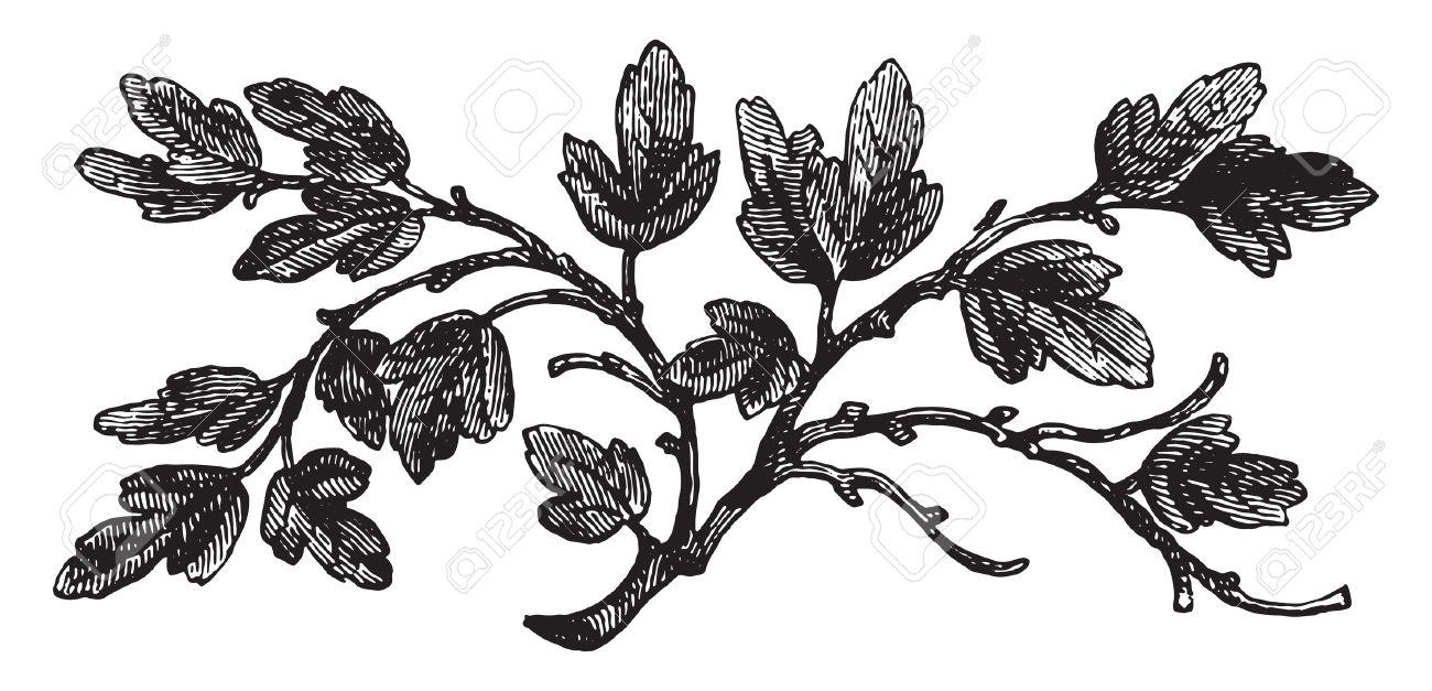 The barren fig tree, vintage engraved illustration. - 41713345