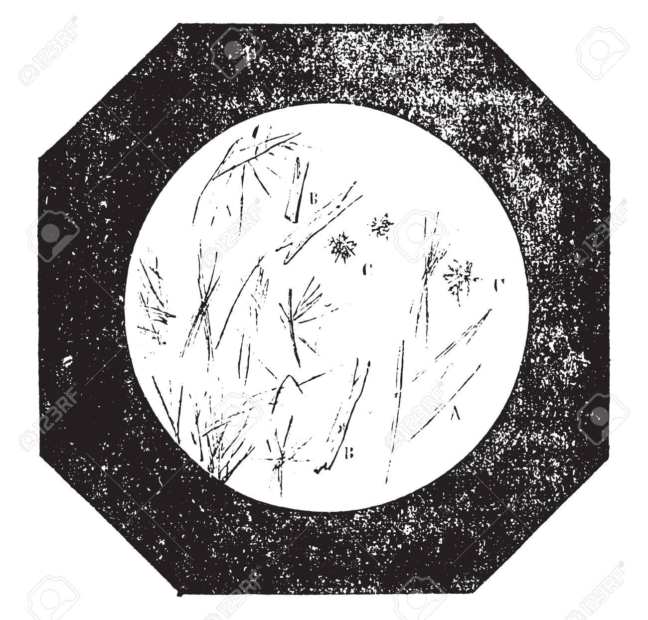 pure coffee, vintage engraved illustration  industrial encyclopedia e -o   lami -