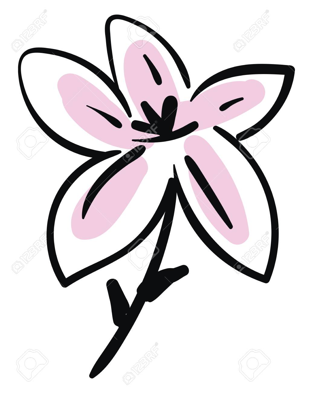 Simple Sketch Of A Black And Pink Lily Flower Vector Illustration Royalty Free Cliparts Vectors And Stock Illustration Image 123462346