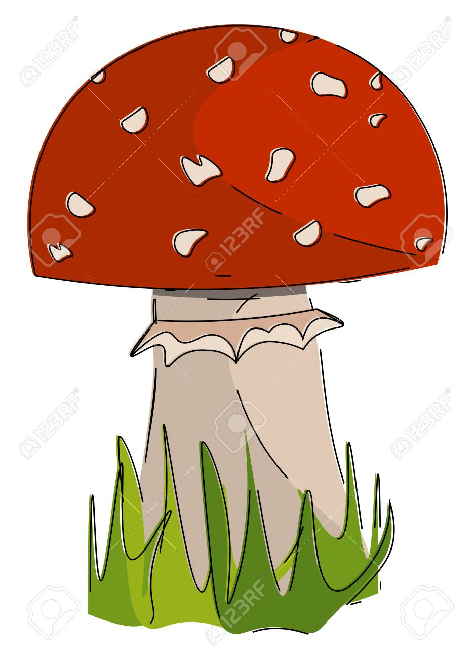 A Picture Of Mushroom In Red Color Vector Color Drawing Or