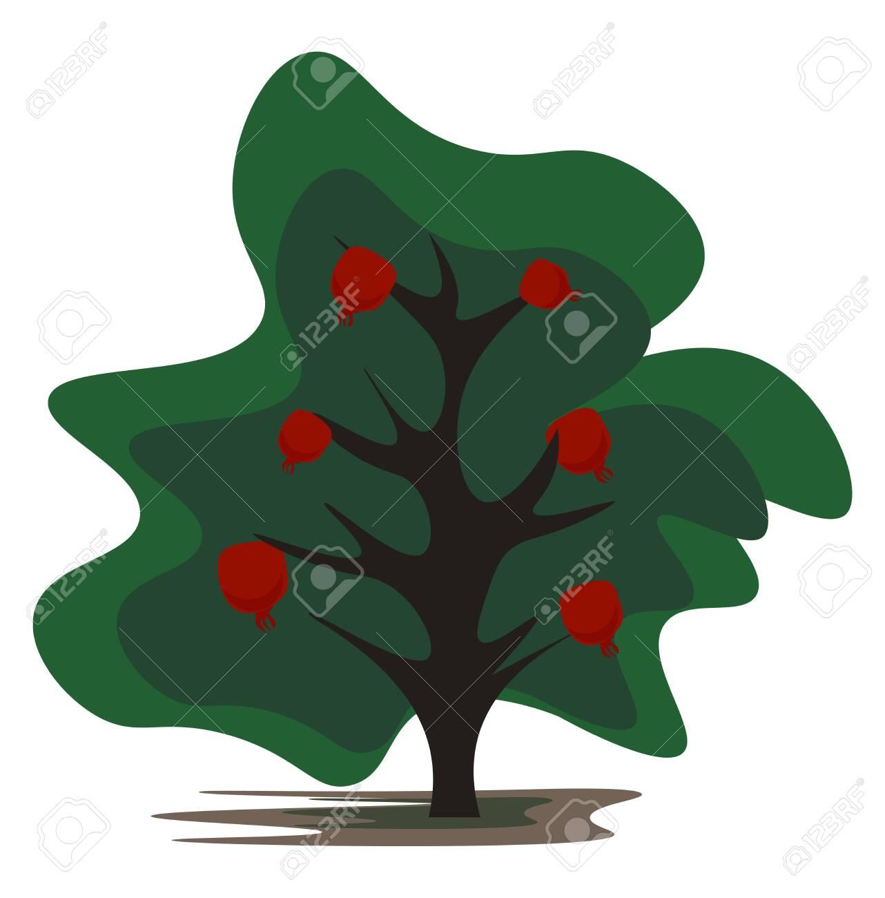 Cartoon Pomegranate Tree Bearing Plenty Of Pomegranate Fruits Royalty Free Cliparts Vectors And Stock Illustration Image 132667323