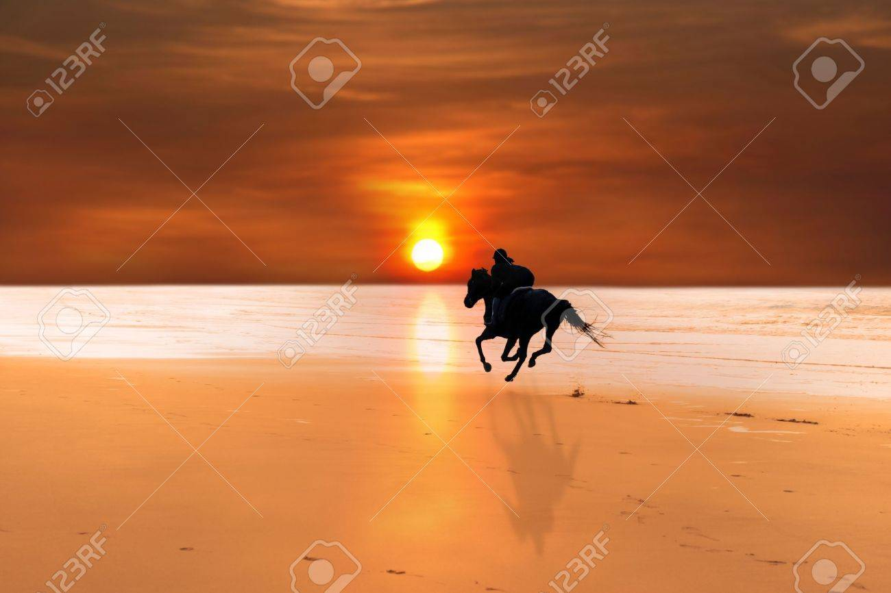 Horse Silhouette Silhouette of a Horse And