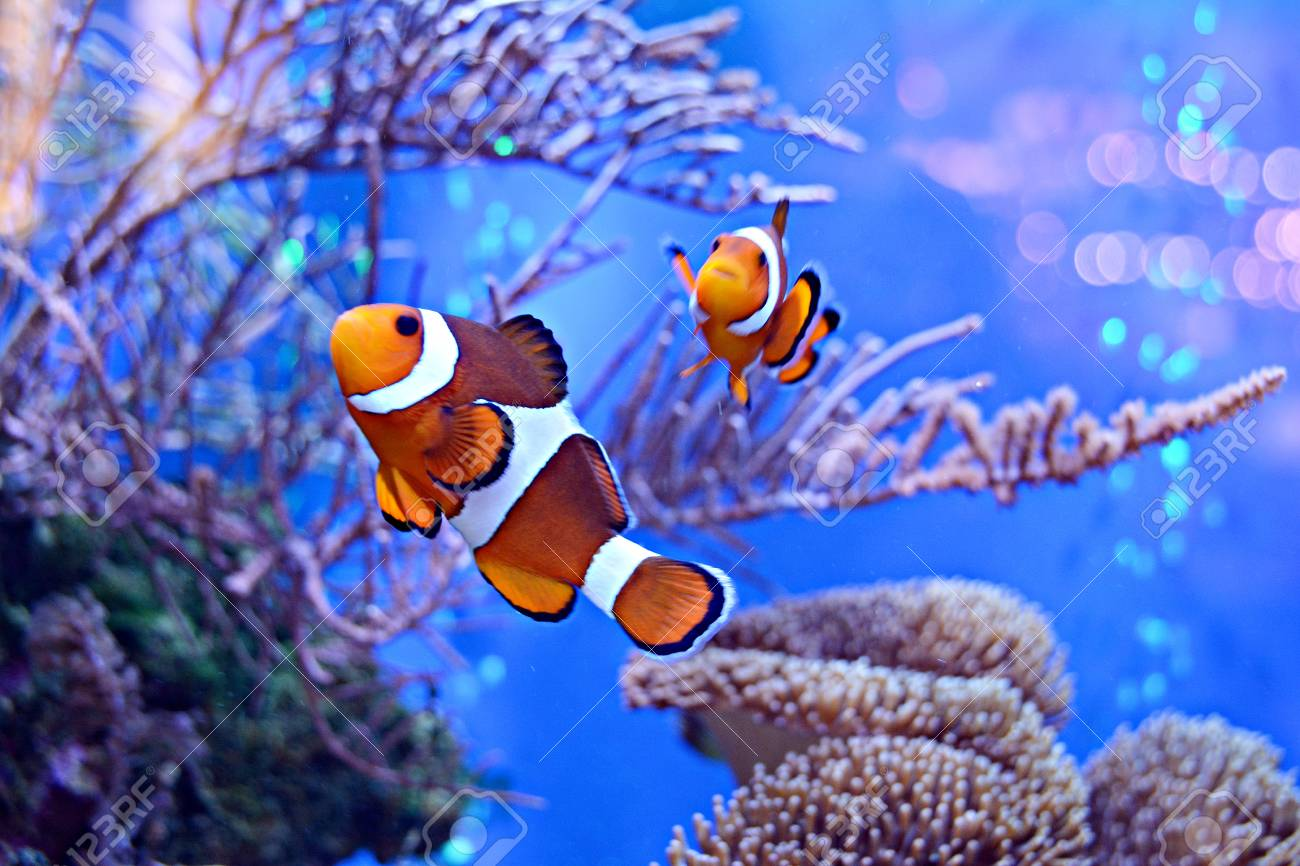 Water Parameters for Clownfish