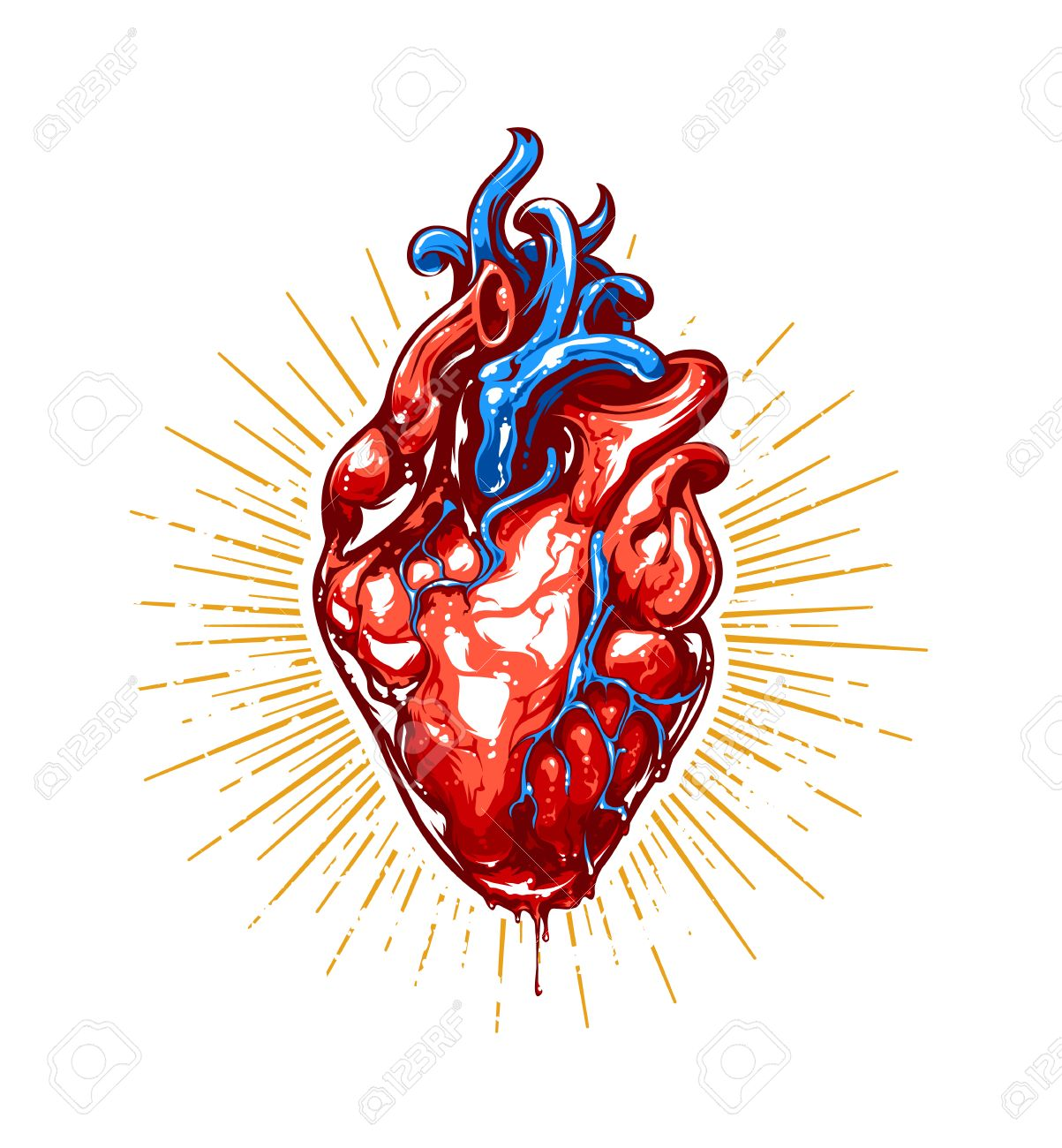 Anatomical Heart With Beams Vector Art Royalty Free Cliparts