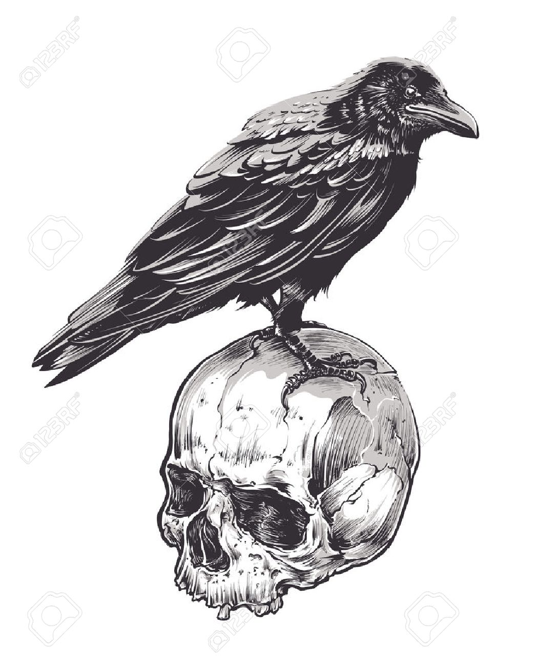 Crow on skull isolated on white. Hand drawn vector art. Sketch vector illustration. - 58619930
