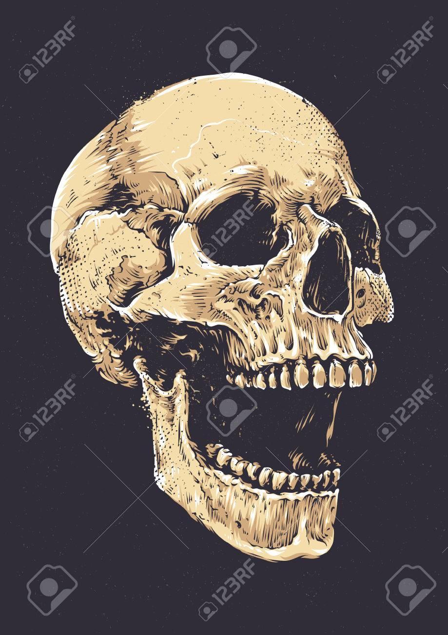 anatomic grunge skull vector art detailed hand drawn illustration rh 123rf com skull images clip art mexican skull art images