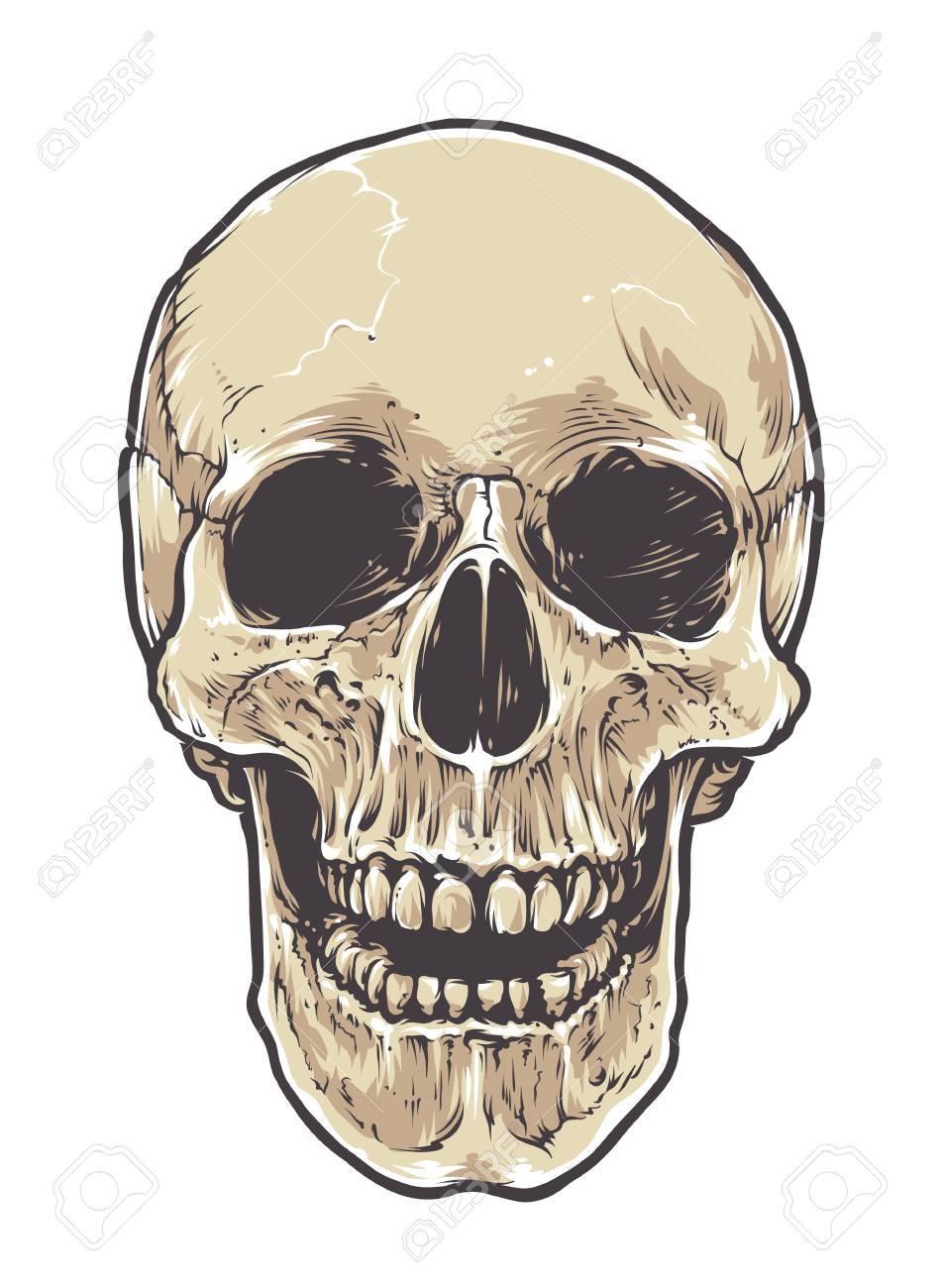 Anatomische Schmutz-Schädel-Vektor Art. Detaillierte Handgezeichnete ...