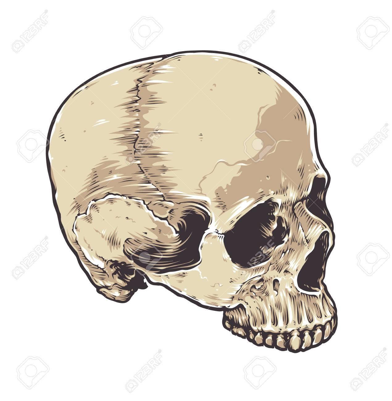 Skull Vector Art Anatomic Grunge Main Detaillee Illustration Tiree