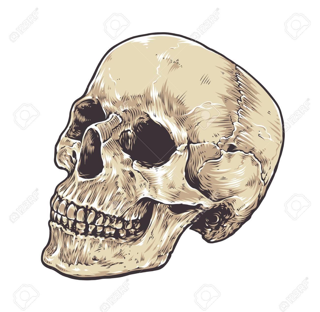Atemberaubend Anatomie Schädel Test Galerie - Menschliche Anatomie ...