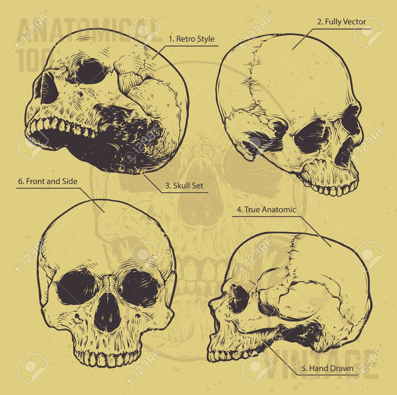 Perfecto Cartel De La Anatomía De La Vendimia Inspiración - Imágenes ...