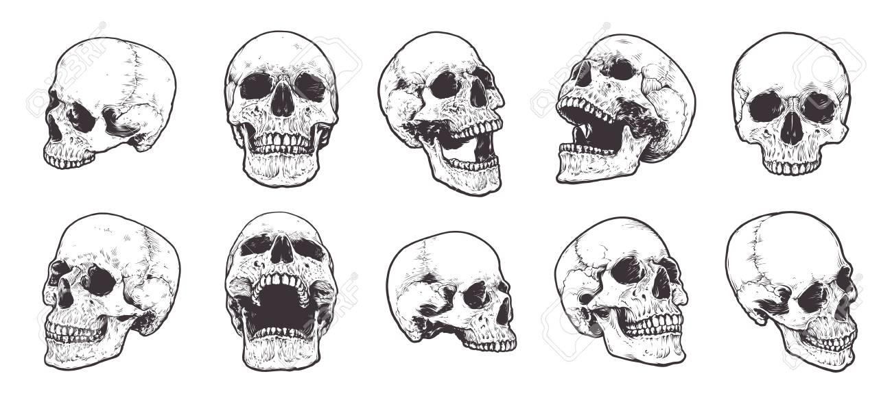 Hand-drawn Anatomical Skulls Vector Set. - 123274255
