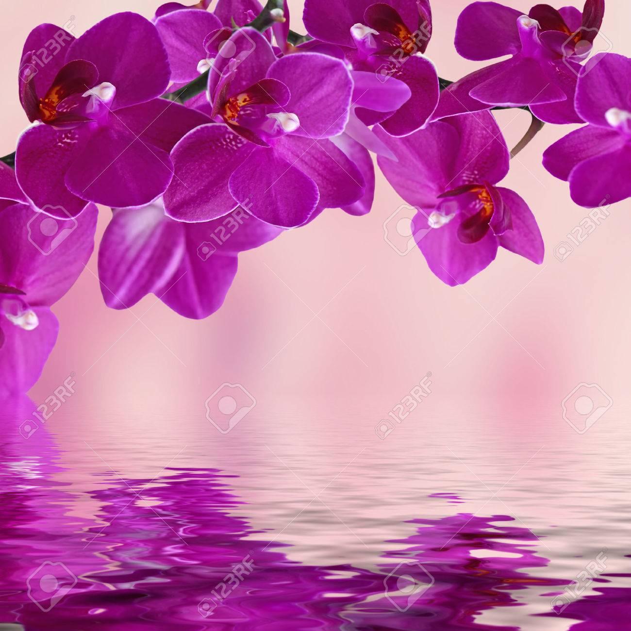 close up de color rosa orquídea ramo de flores de orquídeas se