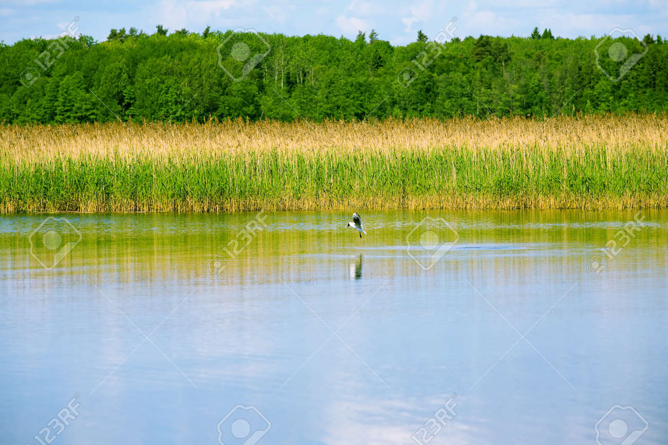 lake with cane, sky and clouds, summer landscape Stock Photo - 4314903