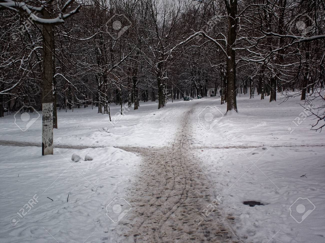 Path Trampled In The Snow-cove...
