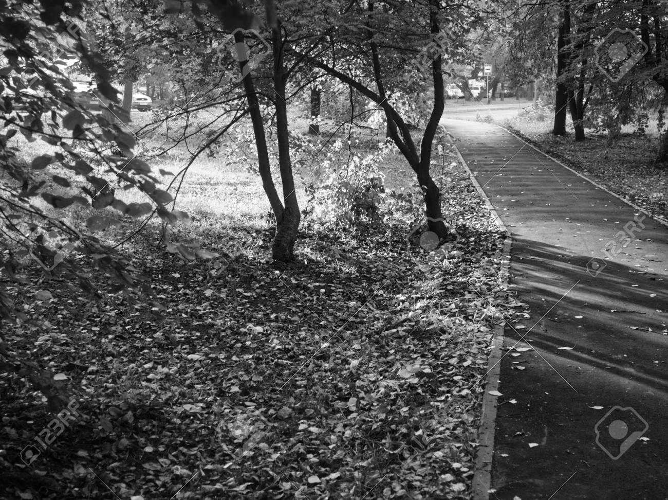 Shadows of trees in the park in summer black and white photo