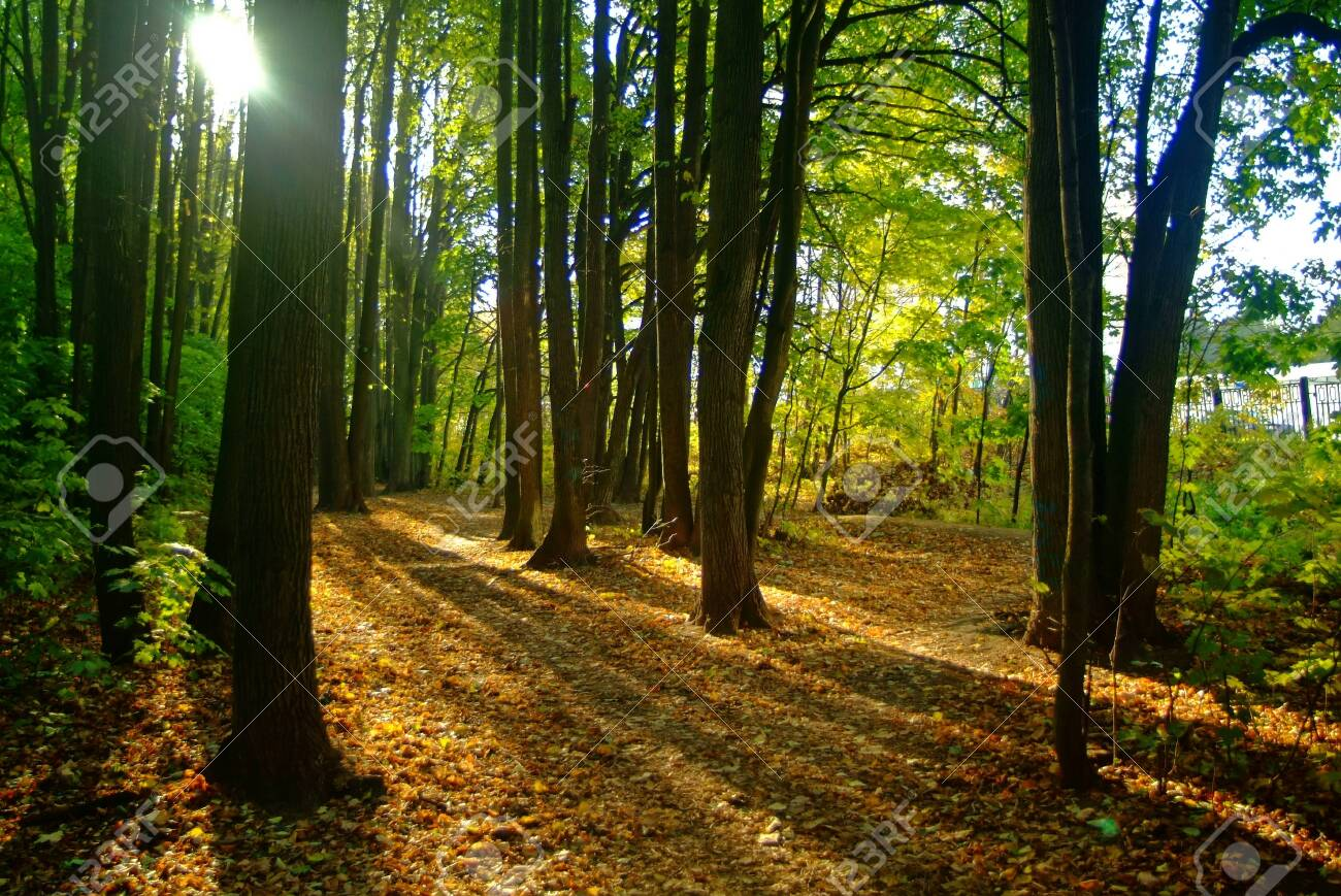 clear day in the autumn forest, Moscow - 148457898
