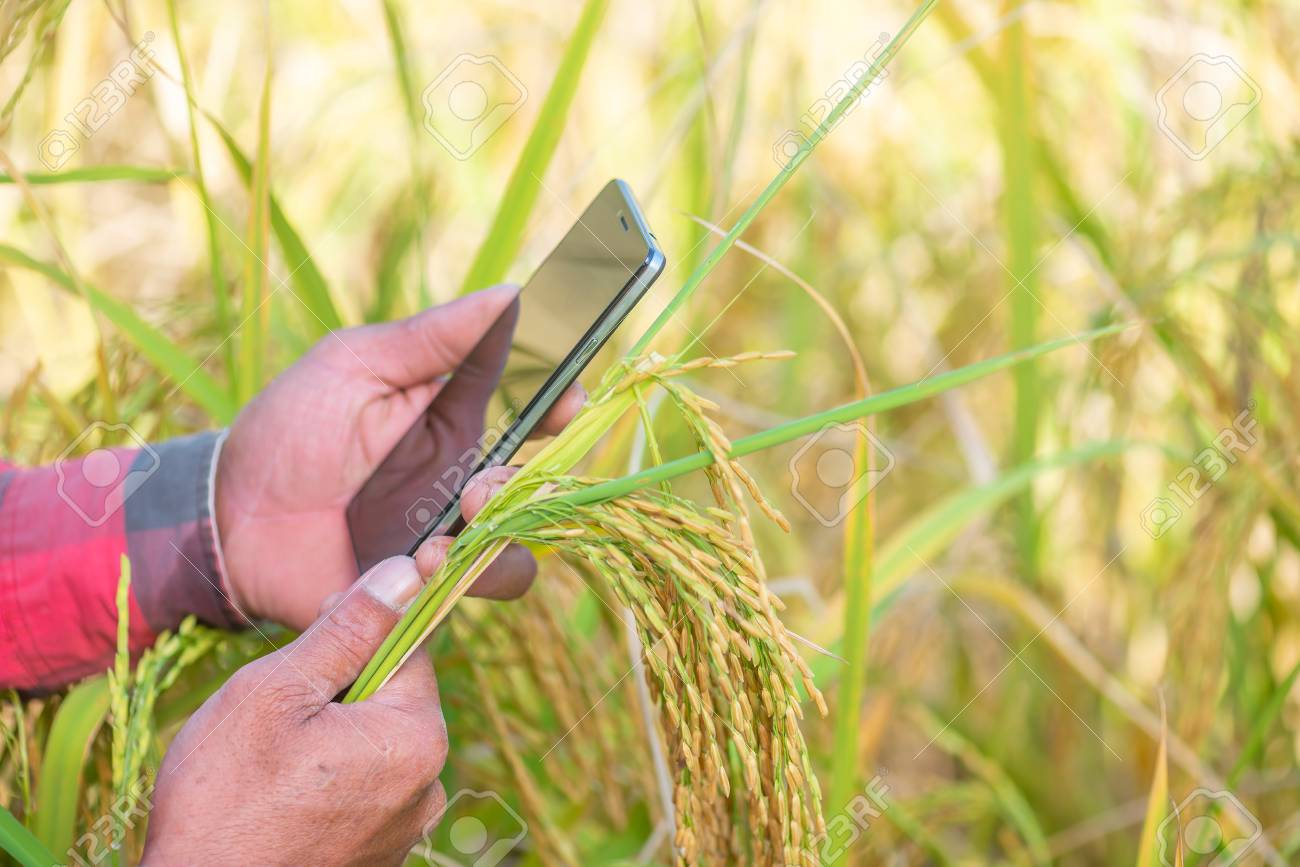 Close up of Farmer hand using mobile phone or tablet Standing