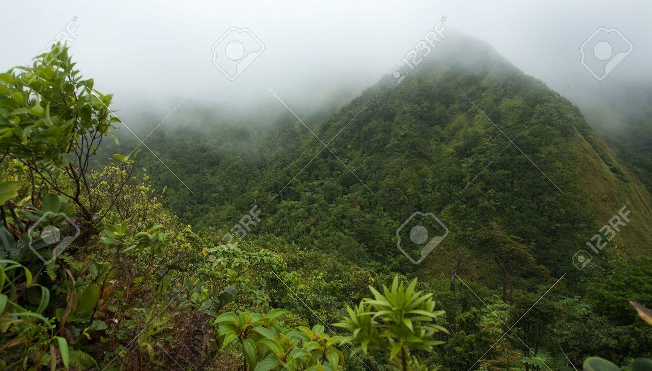 Misty rugged rainforest on lush tropical island Stock Photo - 2774600