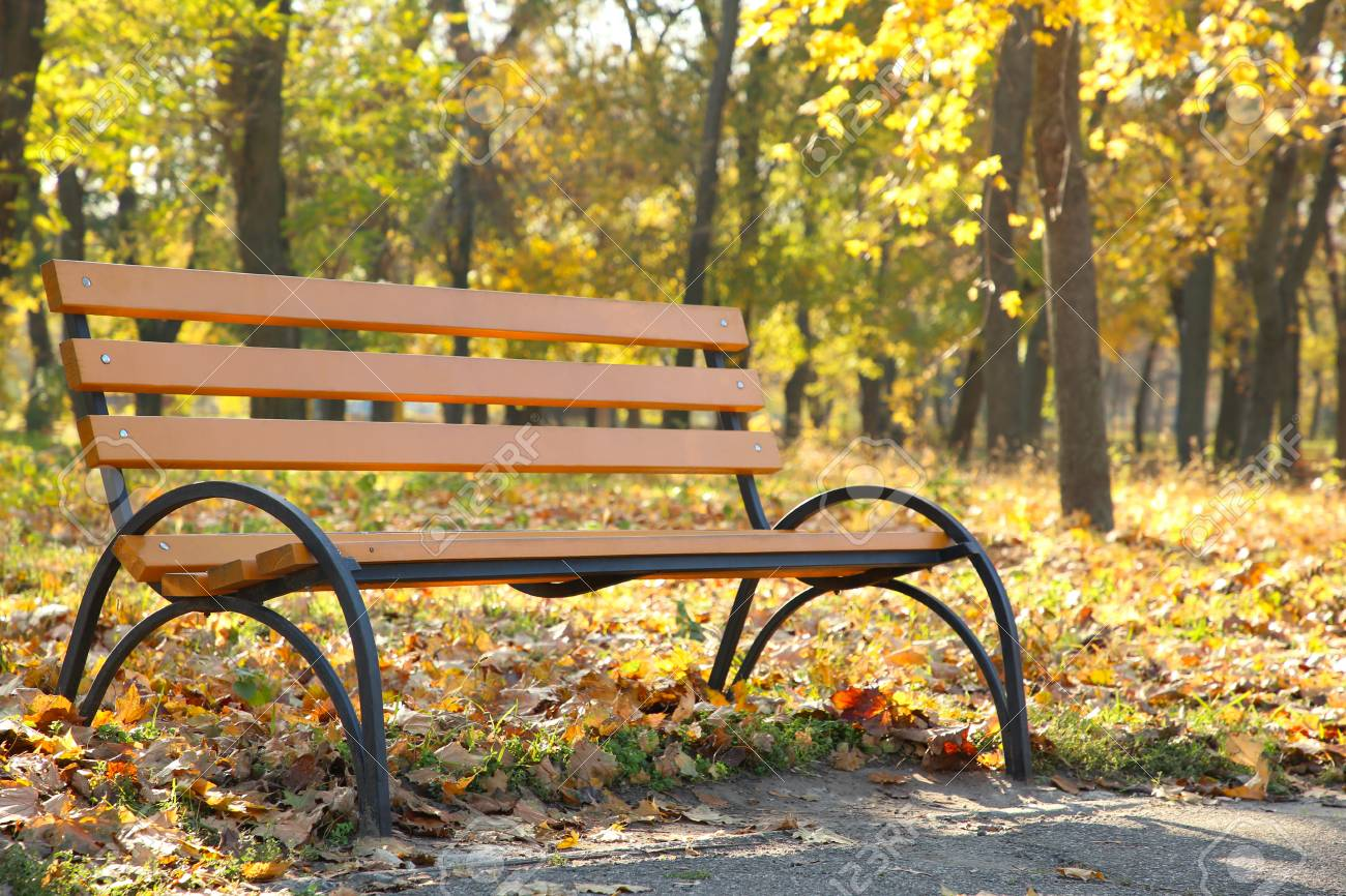 Empty Wooden Bench In The Autumnal Park Autumn Background