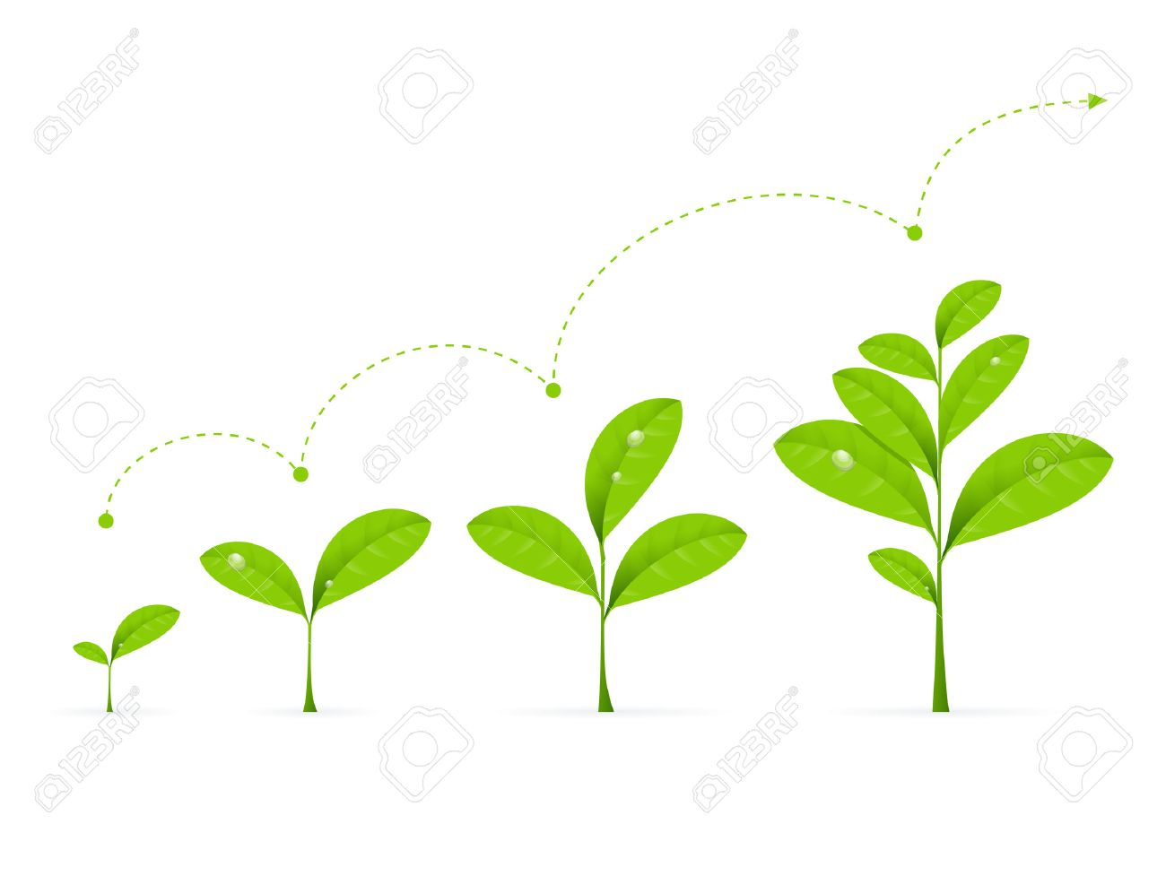 Phases Green Plant Growing. Concept Development Vector illustration - 66813418
