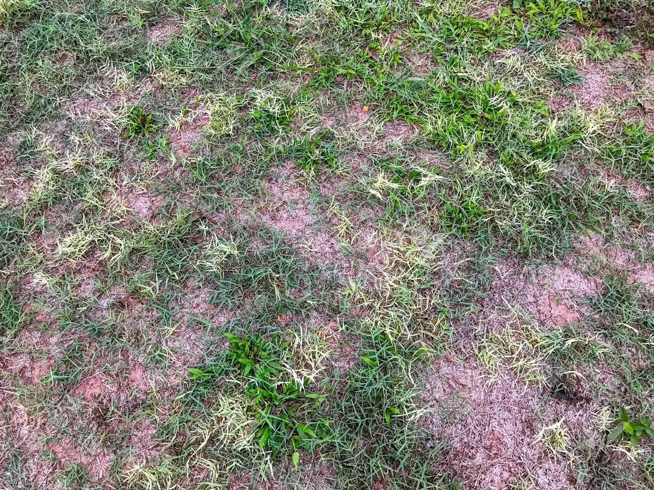 Dirt And Grass Texture At The Field Stock Photo Picture And Royalty Free Image Image 92059176