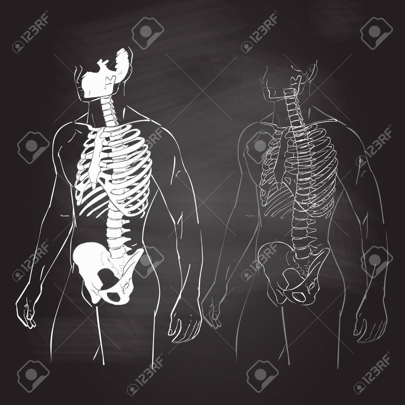 Human Body Parts Skeletal Man Anatomy Illustration Chalk Drawing