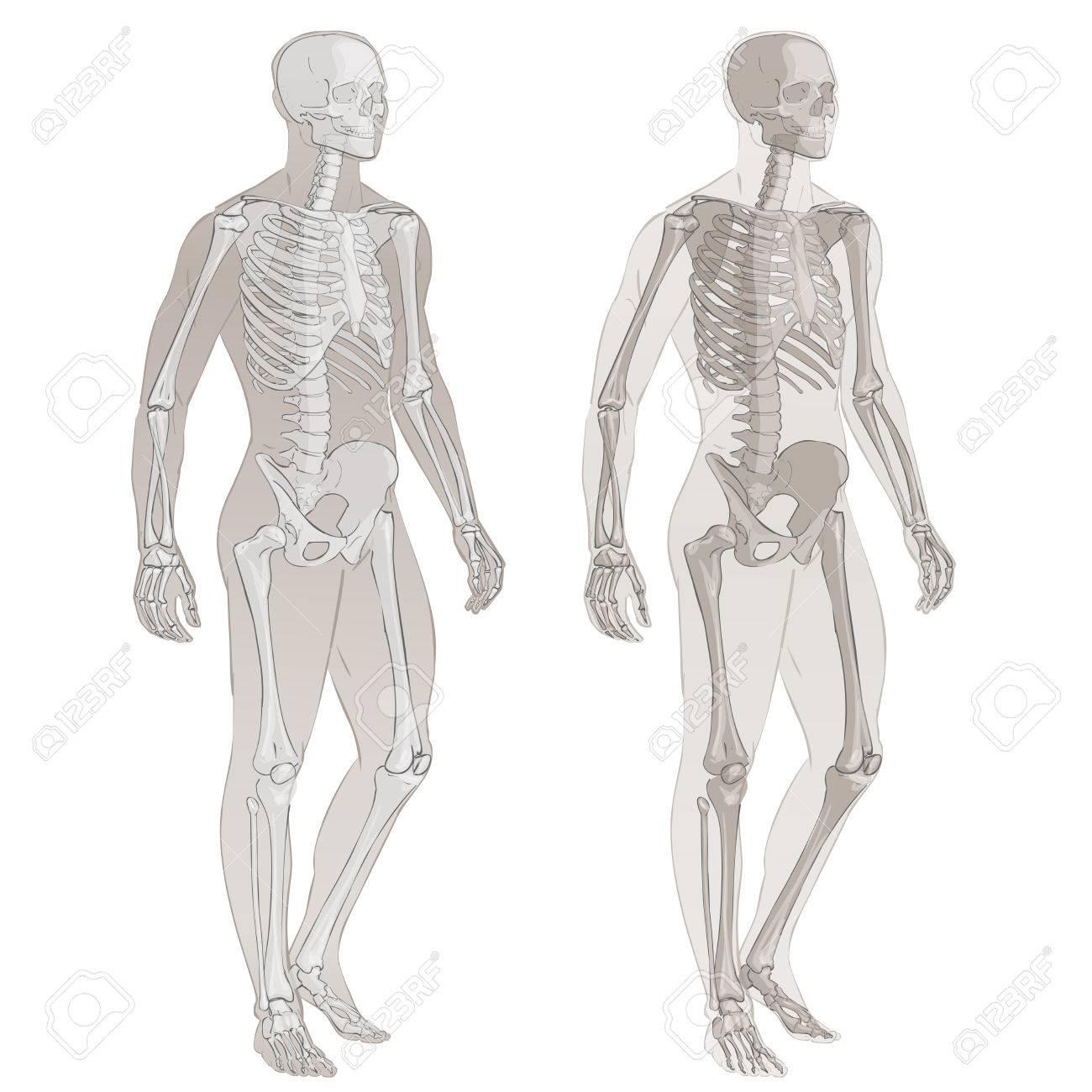 Partes Del Cuerpo Humano Hombre Esquelético Ilustración De La ...