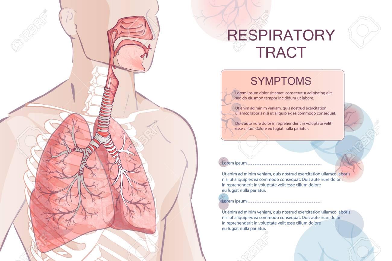 vector human Respiratory System - 106241033