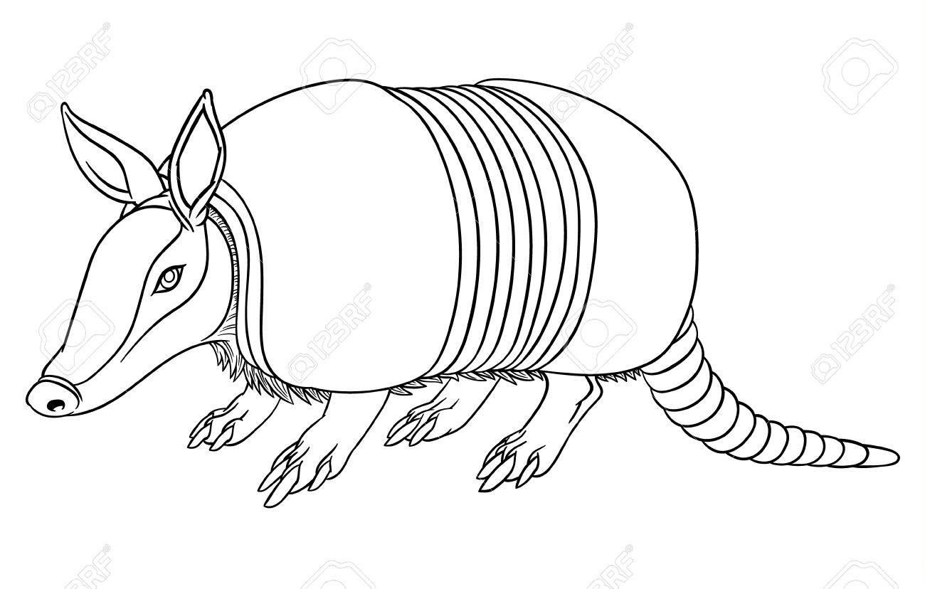 Illustration of a cute cartoon armadillo - 51099364